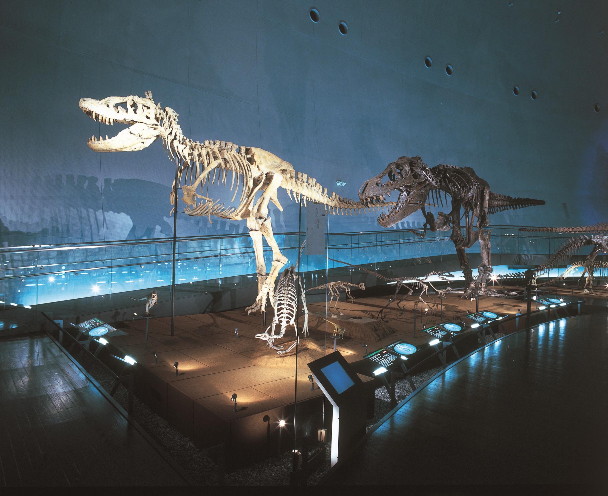 恐竜の化石発掘